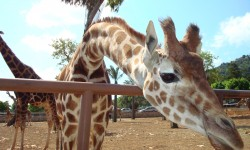 25-04-08 allo Zoo (39)